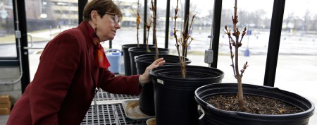 How venerable Anne Frank tree will live on