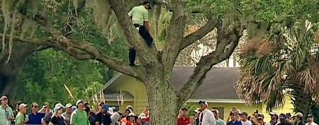 Player's crazy golf shot out of tall tree