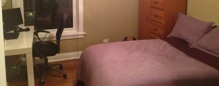 Can you spot a cute dog in this Craigslist ad?