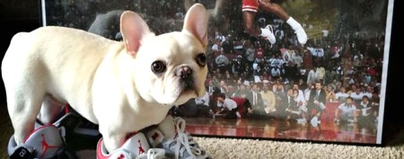 Dog with famous NBA name has big following