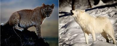 Top 10 wildlife-viewing destinations