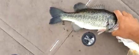 Angler's bass catch is doubly bizarre