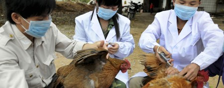 Race to stop new bird flu as fifth victim dies