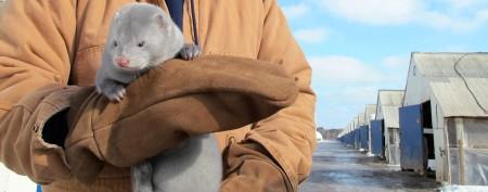 Furs flying over new U.S. mink boom