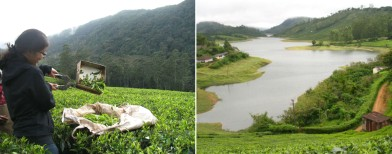 Walk in the clouds in Meghamalai