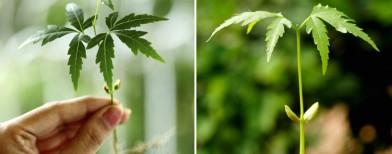 Top 6 beauty benefits of neem