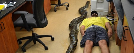 Praise for man who killed enormous python