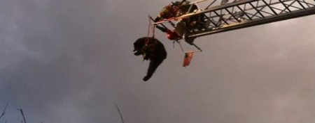 How a 200-pound bear got way up there