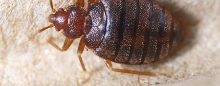 Staggering award for woman plagued by bedbugs