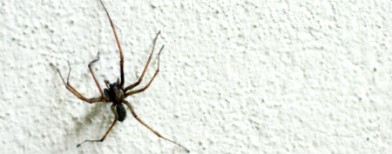 Keep your home pest-free naturally