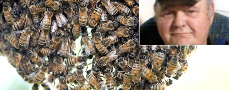 Man killed by massive swarm of Africanized bees