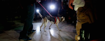 Hero dog returns home to Philippines