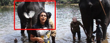 Elephant gets naughty with video presenter