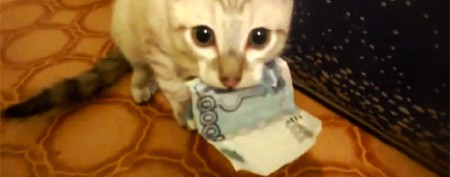 Feisty kitty won't give money back