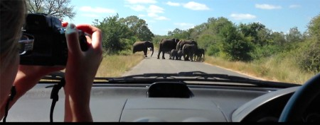 Angry elephant shatters car window