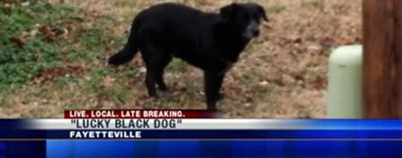 Famous stray dog evades capture 92 times