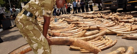 Kenyan officials seize disguised ivory