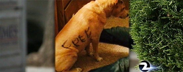 Dog found with 'Free' written on her. (KTVU-TV)