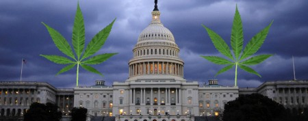 Marijuana legalization in Washington, D.C.?