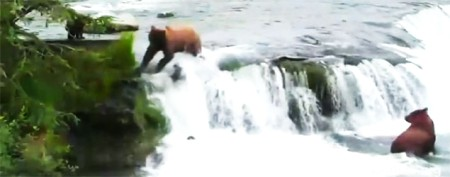 Mama bear rushes to rescue cubs in video