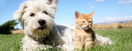 Which dogs, cats are cheapest to own