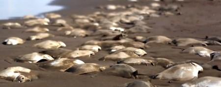 Heartbreaking scene on Mexican beach