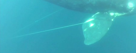 Angler's heroic act saves endangered whale