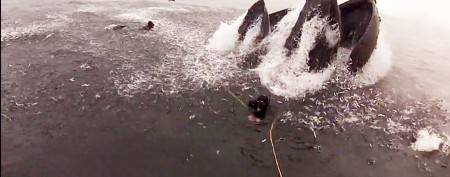 Whales nearly swallow poorly positioned divers
