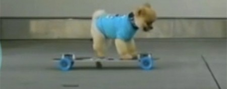 Cute pooch the next 'wonder dog'?