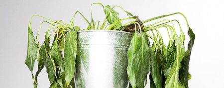 11 signs of a dying houseplant (and how to help)