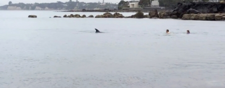 Swimmers' remarkable dolphin encounter