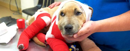 Puppy recovering after horrific journey