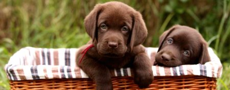The 10 most popular puppy names of 2012