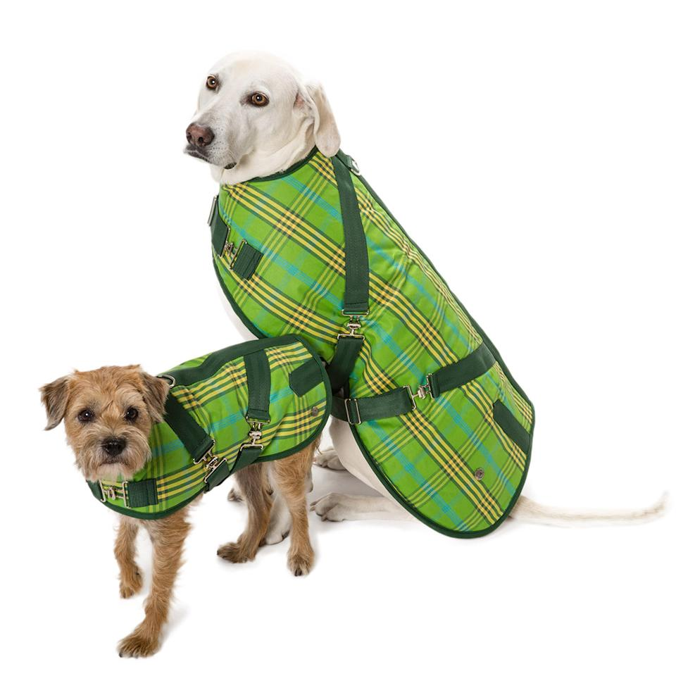 Missoni Home Cactus Garden At Milan Design Week 09: 5 Runway Trends Your Dog Can Wear Too