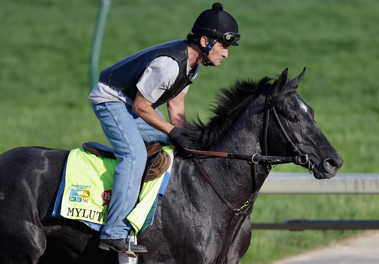 LOUISVILLE, KY - MAY 01: Mylute goes over the track during morning training in preparation for the 2013 Kentucky Derby at Churchill Downs on May 1, 2013 in Louisville, Kentucky.  (Photo by Rob Carr/Getty Images)