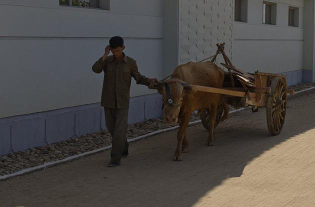 The Ox and cart is still a common sight in North Korea since fuel shortages are a problem. The regime blames such problems on American sanctions.