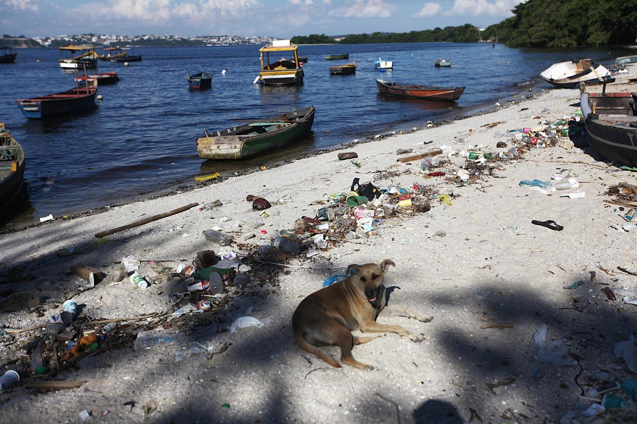 RIO DE JANEIRO, BRAZIL - JANUARY 21: A dog sits along the shoreline of the polluted waters of Guanabara Bay on January 21, 2014 in Rio de Janeiro, Brazil. The iconic bay will be the site of sailing events during the Rio 2016 Olympic Games. Although Rio's Olympic bid included the promise to clean up the filthy bay, industrial and human pollution still remain a major problem. According to the Deputy State Secretary of Environment just 34% of Rio's sewage is treated while the remainder flows untreated into the waters. (Photo by Mario Tama/Getty Images)