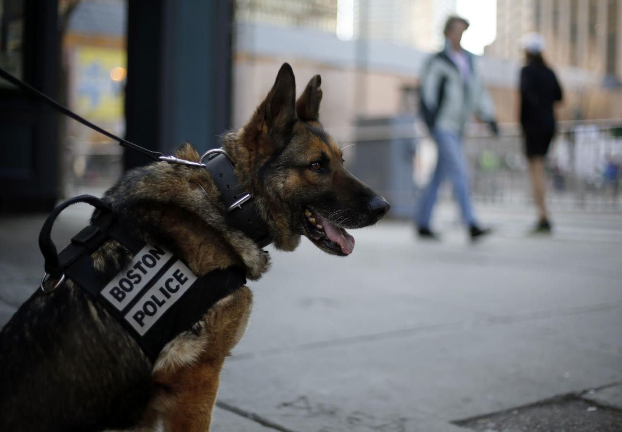 A Boston Police bomb detection dog sits near the finish line of the 118th Boston Marathon Monday, April 21, 2014 in Boston. (AP Photo/Robert F. Bukaty)