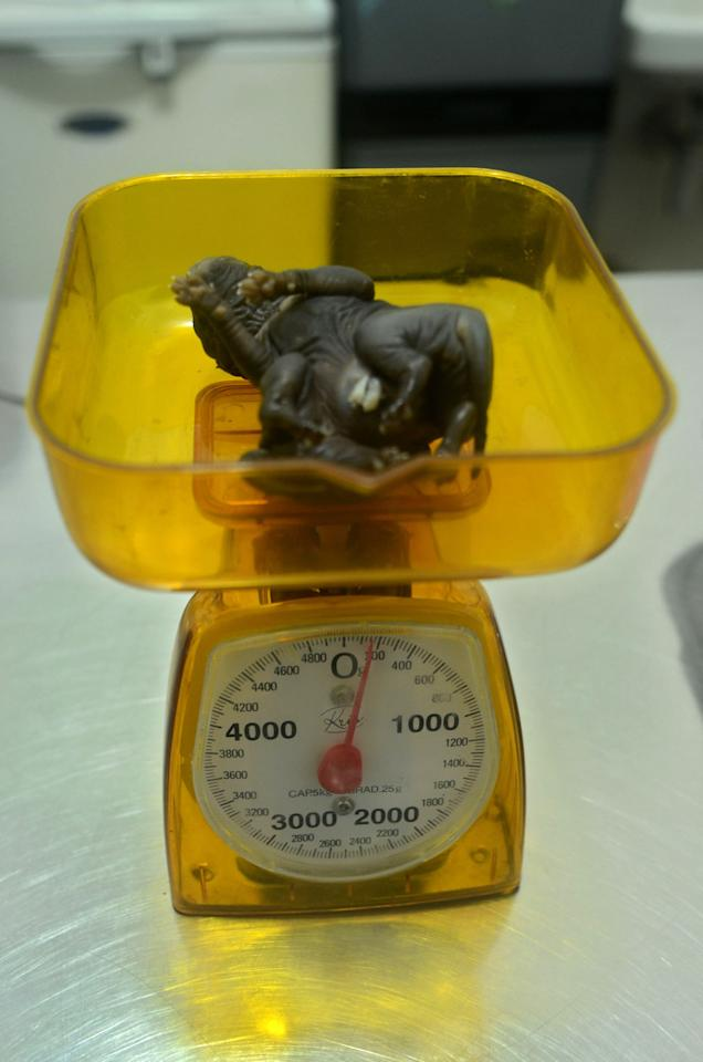 JAKATRA, INDONESIA - MARCH 25:  A seven-legged puppy is seen on a set of scales at a veterinary clinic in Cilandak on March 25, 2013 in Jakarta, Indonesia. The puppy was born on February 8 with a birth defect resulting in it having multiple limbs. The veterinary doctors tried to save the animal, but it did not survive more than an hour after birth. (Photo by Nurcholis/Getty Images)