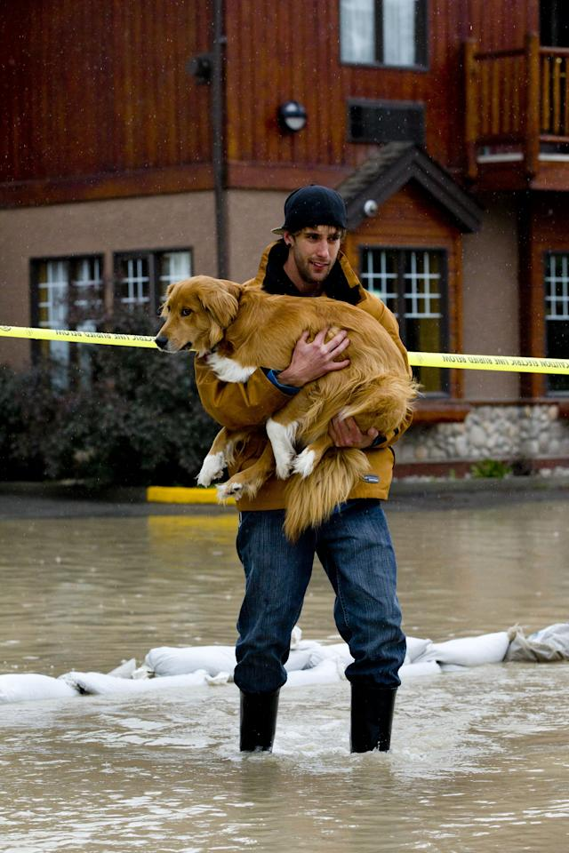 CANMORE, CANADA - JUNE 21: Mike Sommers carries his dog Kratos through the floodwater outside his apartment June 21, 2013 in Canmore, Alberta, Canada. Widespread flooding caused by torrential rains washed out bridges and roads prompting the evacuation of thousnds. (Photo by John Gibson/Getty Images)