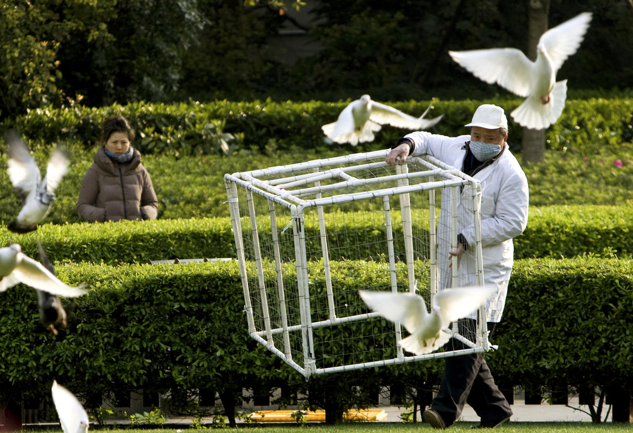 A worker carries a cage to catch pigeons at the People's Square as a precautionary measure against bird flu in Shanghai on Saturday April 6, 2013. Shanghai has reported two more cases of human infection of a new strain of bird flu, raising the number of cases in eastern China to 20. Six of the people who contracted the virus have died. (AP Photo) CHINA OUT