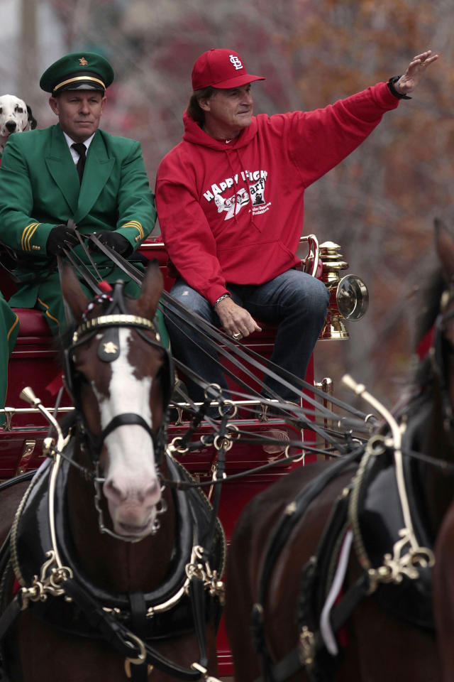 ST. LOUIS, MO - OCTOBER 30:  Manager Tony La Russa of the St. Louis Cardinals rides with the Budweiser Clydesdales during a parade celebrating the team's 11th World Series championship October 30, 2011 in St. Louis, Missouri. (Photo by Whitney Curtis/Getty Images)
