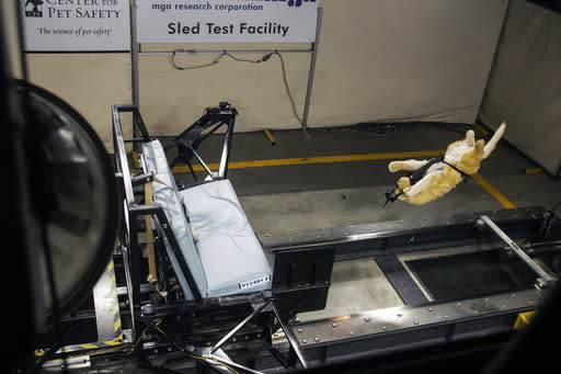 Crash tests use Center for Pet Safety's dummy dogs