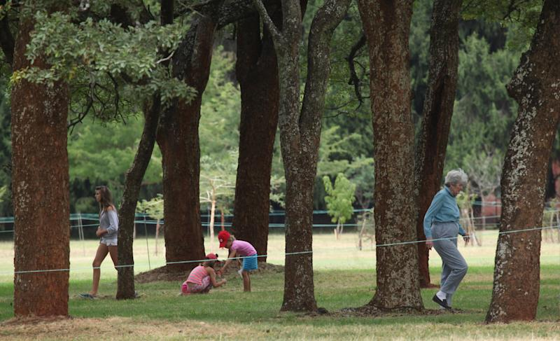 At Zimbabwe golf club, 'foreign' trees exit stage