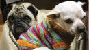 Pet Retirement Home Rescues Dogs In Their Golden Years