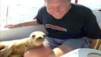 Baby Sea Lion Jumps Onto Boat
