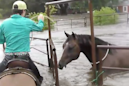 Teen saves horse trapped by Harvey's rising floodwaters with dad's help
