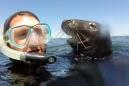 Curious wild seal checking out a snorkeler is amazing and nerve-wracking