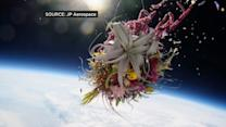 Artist sends plants into space for stunning pictures