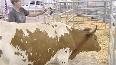 Deirdre Fitzpatrick, The Texas Longhorn, Wins At State Fair